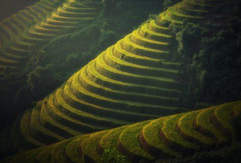 Agriculture, Vietnam