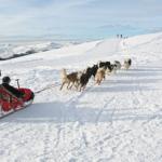 Savoie Pralognan chiens de traineau